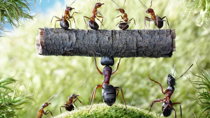 strong-ants